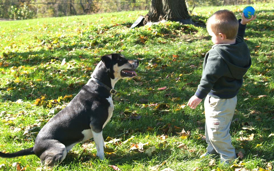 Level 1 Animal Assisted Play Therapy – Pennsylvania: May 2017SOLD OUT